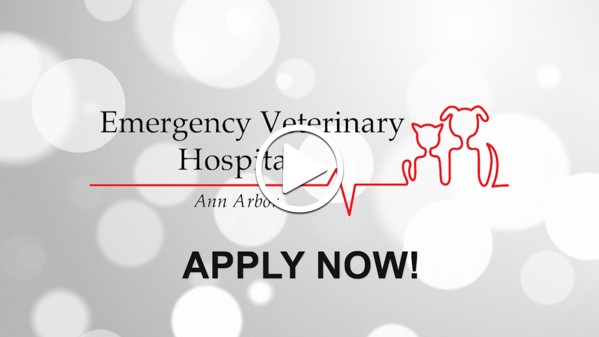 Watch our careers video for available job opening Emergency Veterinarian in Ann Arbor, Michigan in Ann Arbor, MI, USA