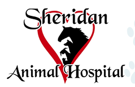 Watch the job video below to learn more about the career opening Mixed Animal Associate Veterinarian at Sheridan Animal Hospital, Inc in Sheridan,   MI,   USA